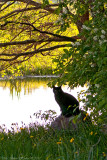 Fishing (?) cat by the stream