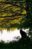 Fishing Cat 2