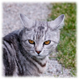 Neighbours cat, of course it´s giving Bonnie the evil eye ;o)