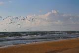 IMG_1193 terns.jpg