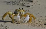 IMG_1220 ghost crab.jpg