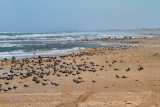 IMG_1262 shorebirds.jpg