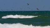 IMG_1330 terns pelicans.jpg