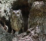 Coast Bend Wildlife Photo Contest Entries