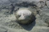 Submerged turtle sculpture, Forfar Flats