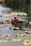 Naples Botanical Gardens