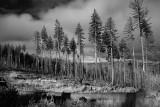 Wilhorse, Siskiyou National Forest
