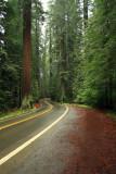 Avenue of the Giants,  Humbolt Redwoods, CA