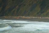 Humbug Cove