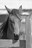 Pistol River Trail Horse