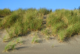 Seagrass, dune and sky