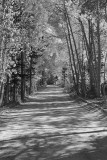 Tree-lined Dirt Road, North Lake