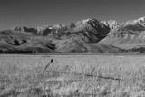 Dormant Field, Eastern Sierra Nevadas
