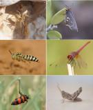 ARTHROPODA (phylum): 566 species