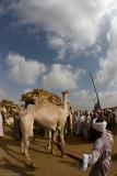Camel Market - Suq el Gamal - Birqash, Egypt