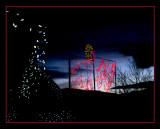 denver_christmas_lights