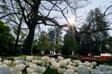 Fête de la Tulipe 2011