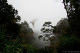 Kinabalu NP