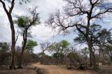 Bwabwata East NP