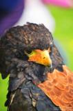 Bird of prey (II)