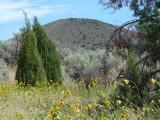 Typical Pocatello summer scene horizontal P1060316.jpg