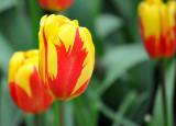 Flower Bulb Closeup 1
