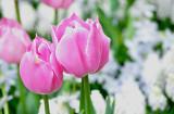Flower closeup 2