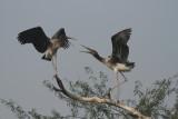 Delhi Zoo - Dec 2011