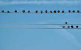 20 Birds on Three Wires
