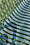 Repeating Lines in a Park Bench