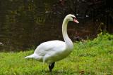 Swan at Linderhof Palace-IMG_0260-800.jpg