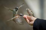 Il parle aux oiseaux