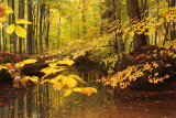 Red Brook, Autumn - Rode spreng, herfst
