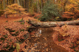 Brooks, autumn - Sprengen, herfst