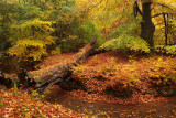Brook, autumn - Sprengen, herfst