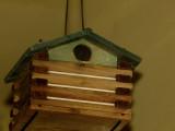 Wren babies, adults and a wren house.