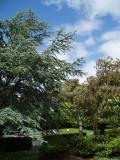 Auckland Holiday Inn Garden