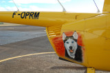 F-OPRM going to the dogs