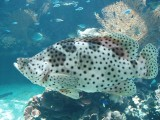 Noumea aquarium fish