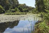 08_10_10 University & Wetlands