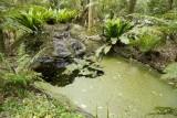 Wetland045.jpg