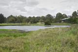 Wetland049.jpg