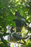 Blackbutt007.jpg