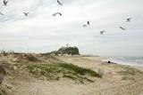 08_06_11 Nobbys Beach