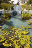 Pond, Herb Garden
