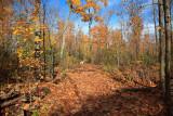 Oakville Woods, November 2009
