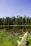 Pond in Yosemite