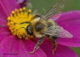 20081012 091 Bee SERIES.jpg