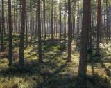 Pine Light