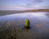 Low tide Lossiemouth.